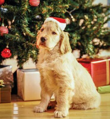 Anxiety-Busting Tips and Remedies for Pet Stains Over the Holidays